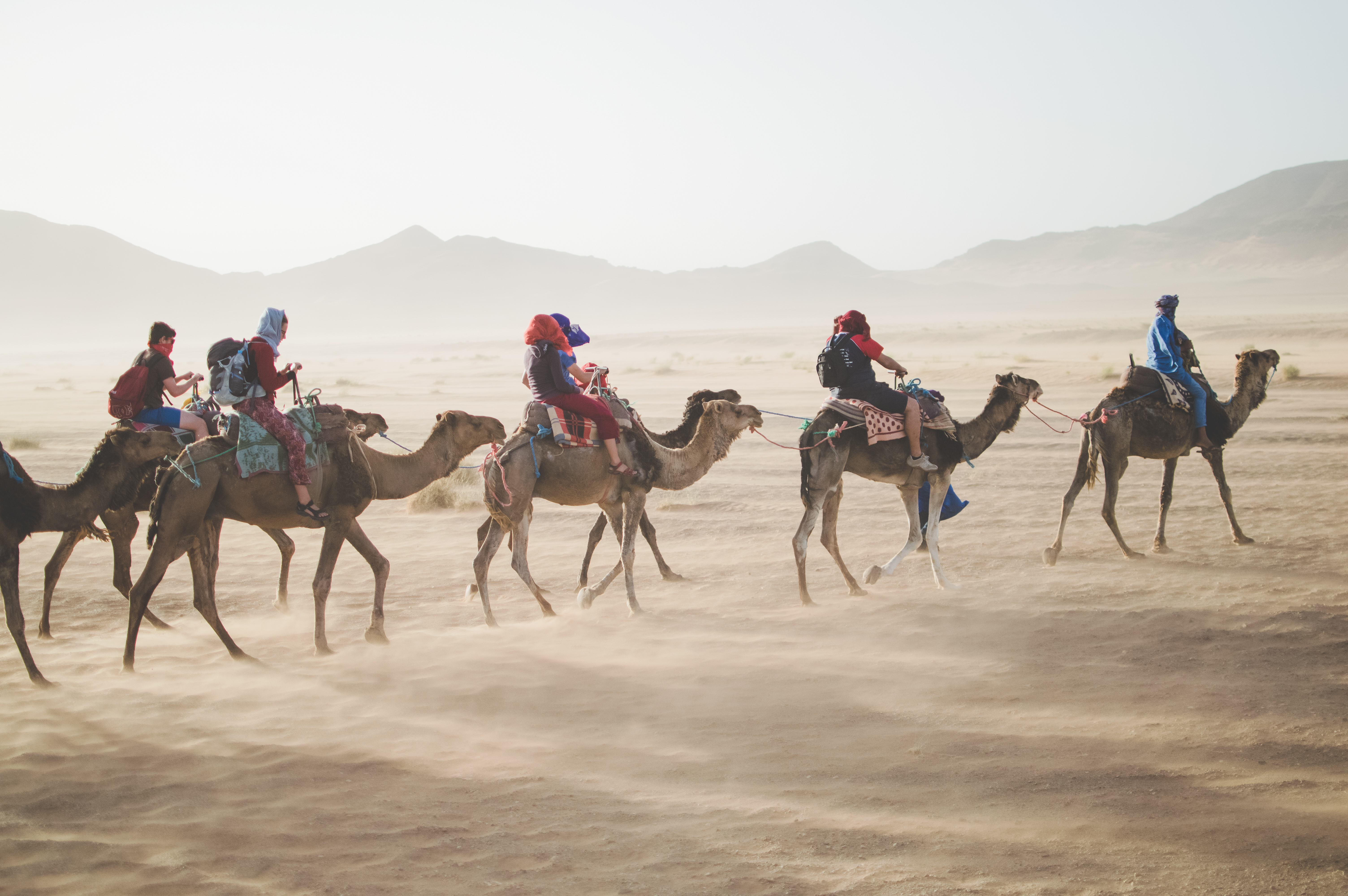 travel_camel_middle_east